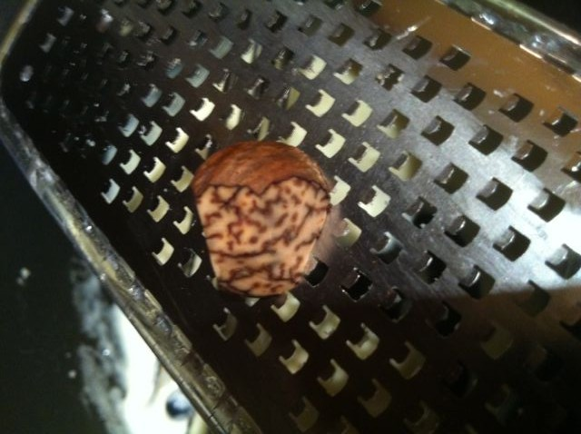 A well-loved nutmeg nut gets another hit from the Microplane grater.
